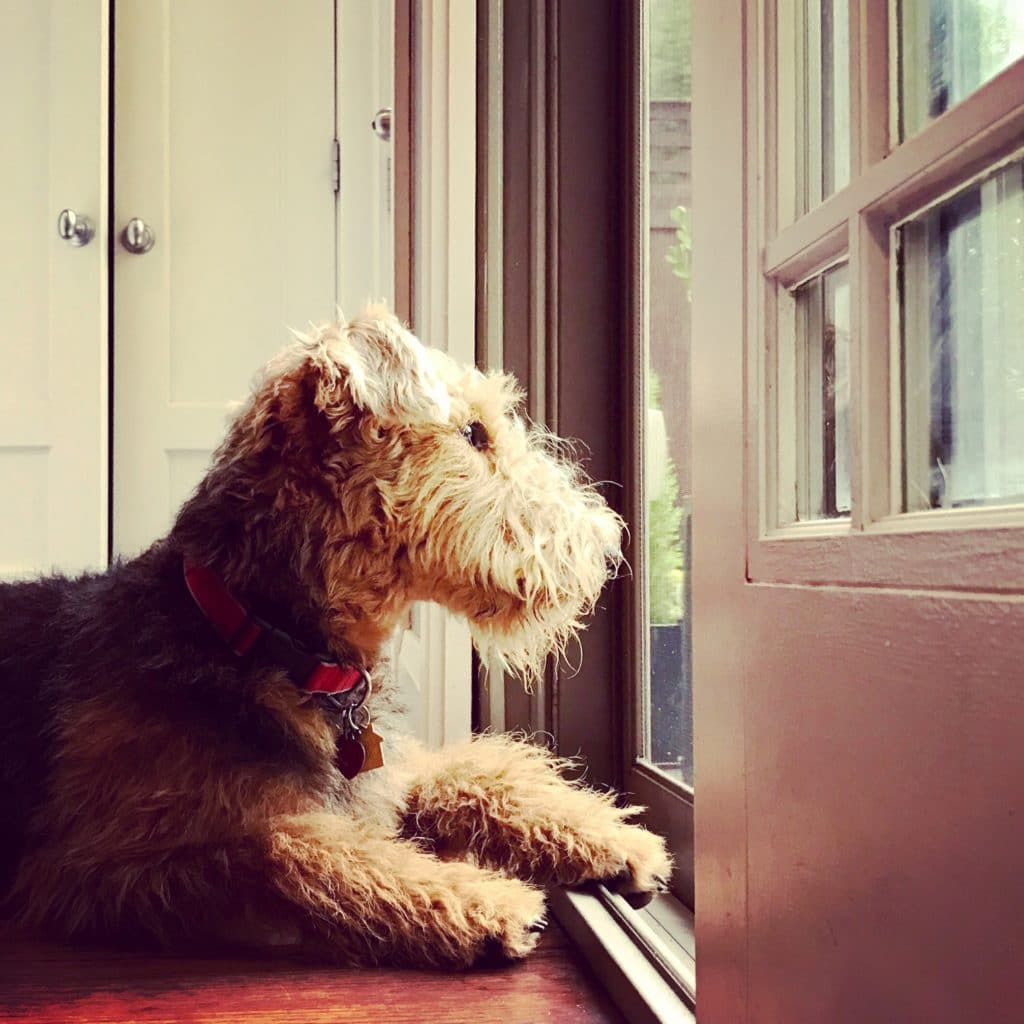 The Fashion Magpie Airedale Terrier Puppy Door