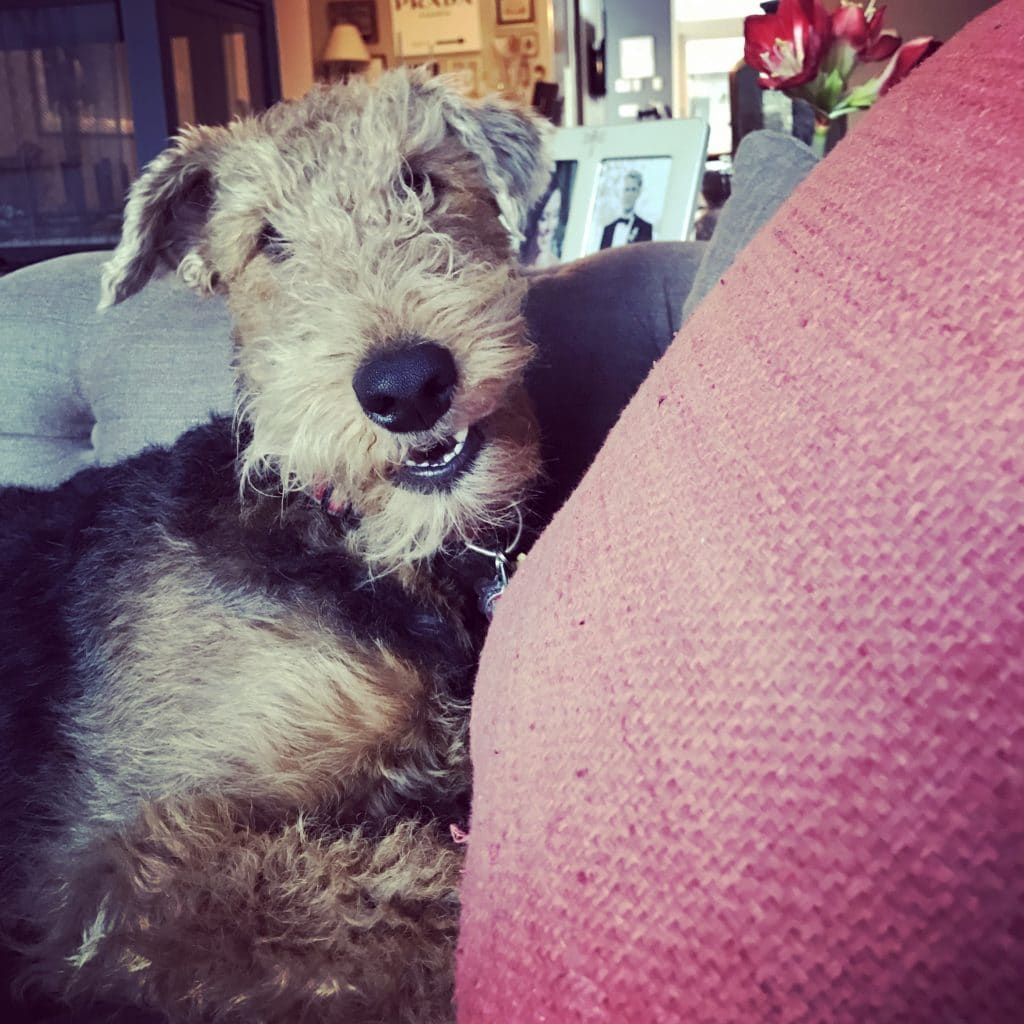The Fashion Magpie Airedale Terrier Puppy Pillow